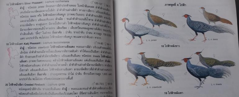 Thaibookpheasants