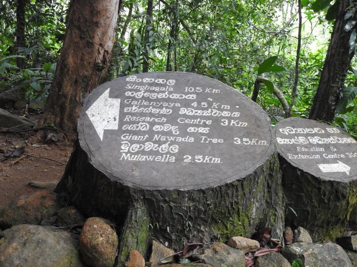 Sinharaja2