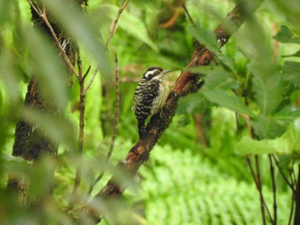philwoodpecker