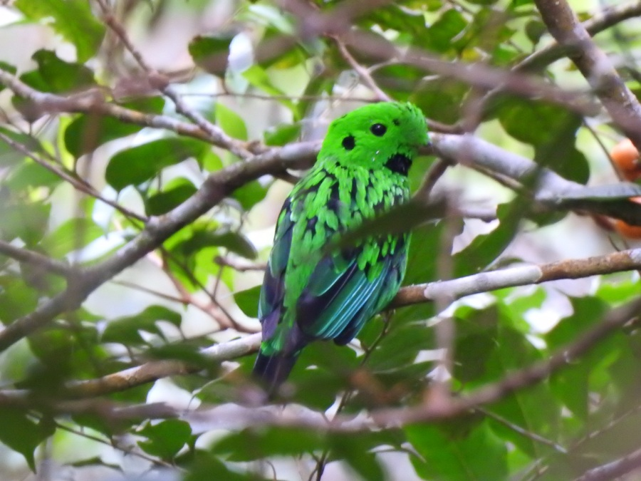 Bird Names, Part3